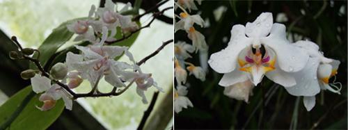 Orchidées Imprimé BettyJanis