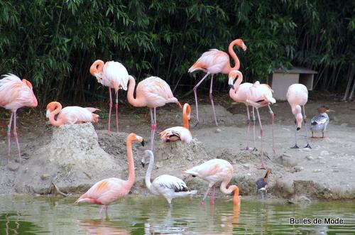 Sortie sympa Parc des Oiseaux (1)