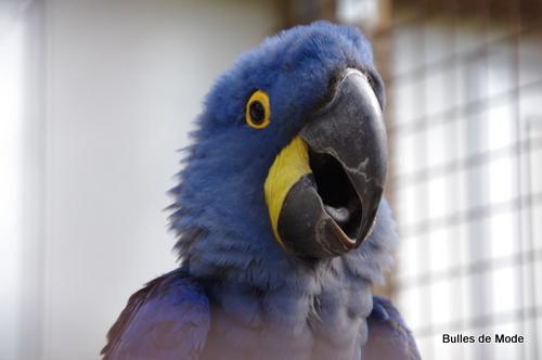 Mon copain le perroquet bleu