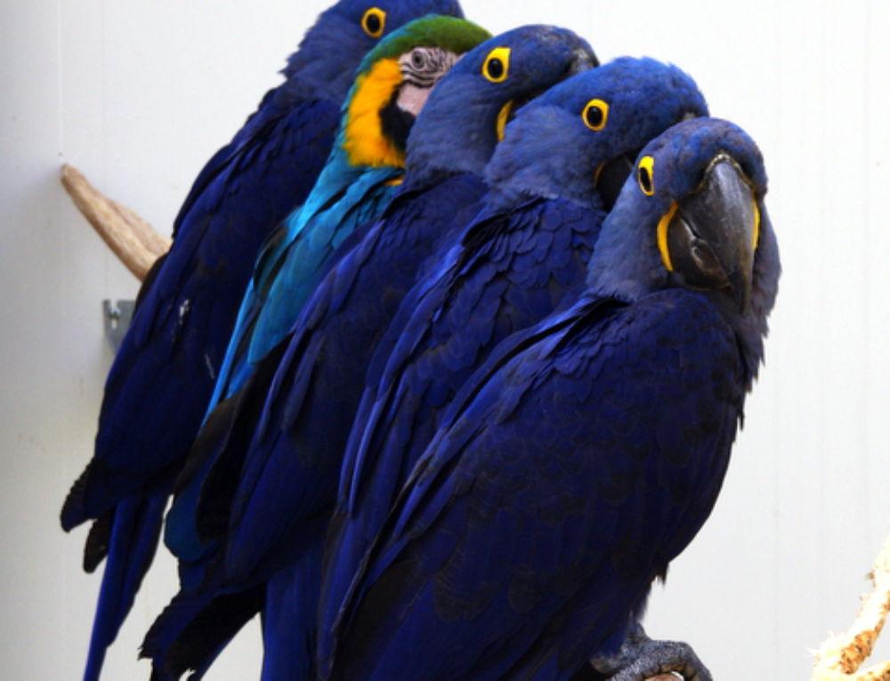 L'été en technicolor au Parc des Oiseaux
