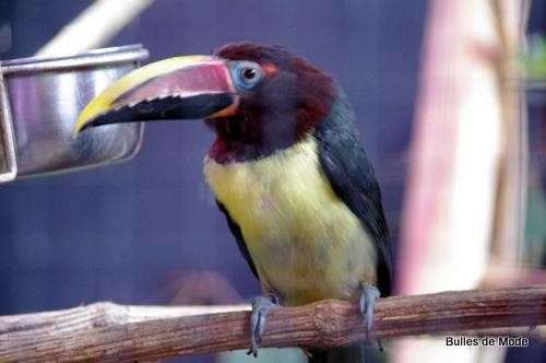 Sortie sympa Parc des Oiseaux (3)