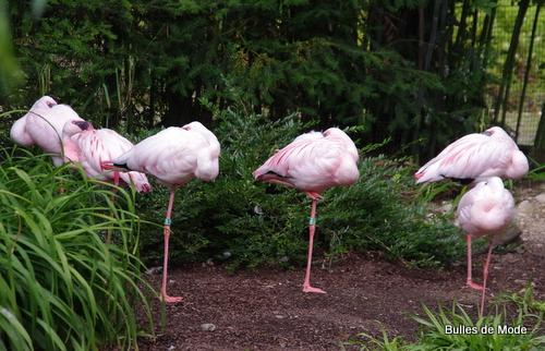 Sortie sympa Parc des Oiseaux (34)
