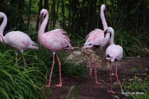 Sortie sympa Parc des Oiseaux (35)