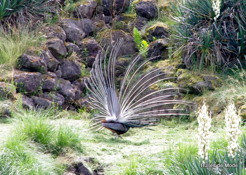 Sortie sympa Parc des Oiseaux (5)