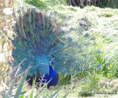 Sortie sympa Parc des Oiseaux (7)