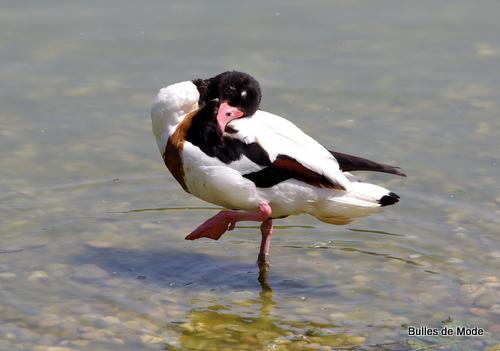 Sortie sympa Parc des Oiseaux (9)