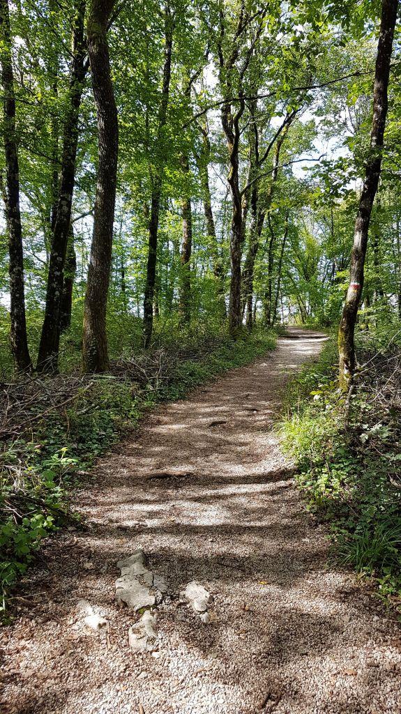 Forêt La Châtelaine