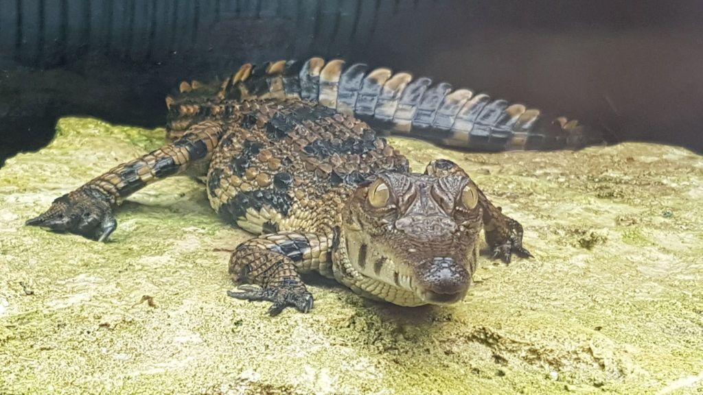 Ferme Crocodiles Drôme Pierrelatte (4)